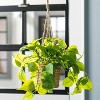 Faux Pothos Leaf Hanging Plant - Hearth & Hand™ with Magnolia - image 2 of 4