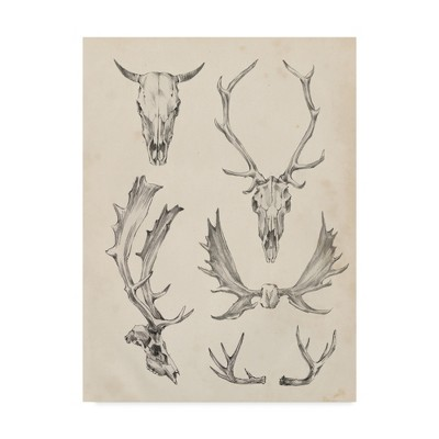 "Ethan Harper ""Skull And Antler Study II' Canvas Art - Trademark Fine Art"