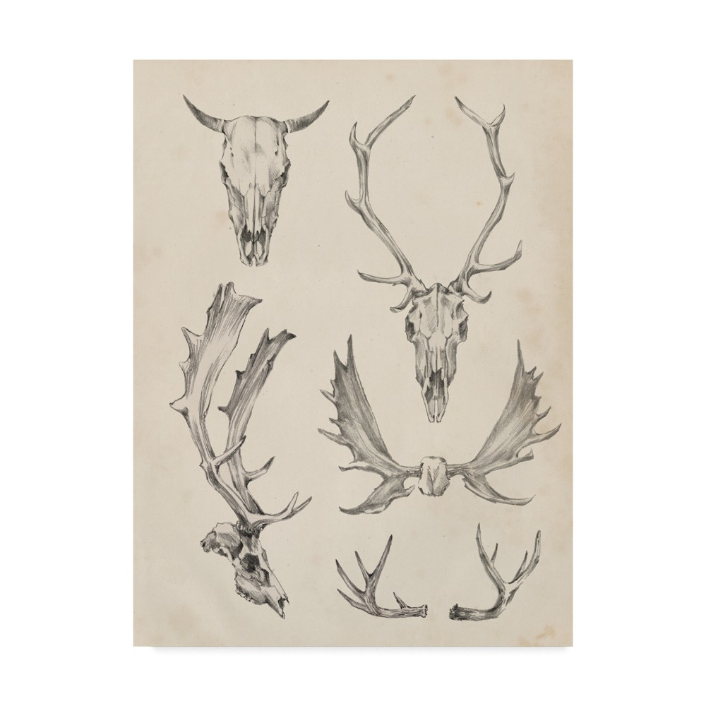 "Image of ""14X19"""" Ethan Harper """"Skull And Antler Study Ii' Canvas Art - Hey! Play!, Multi-Colored"""