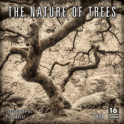 2020 the Nature of Trees 16-Month Wall Calendar - by  Paul Kozal - image 1 of 1