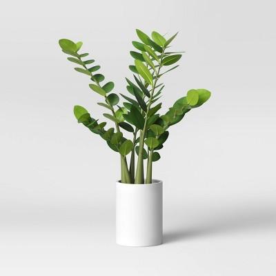 "23"" x 18"" Artificial Zamioculcas Zamiifolia Plant in Pot - Project 62™"