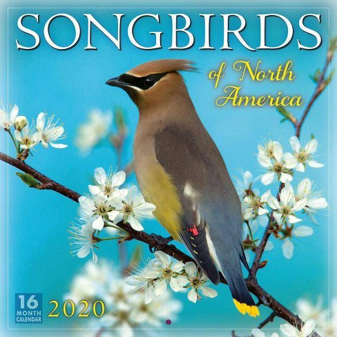 2020 Songbirds of North America 16-Month Wall Calendar - by  Inc Sellers Publishing - image 1 of 1