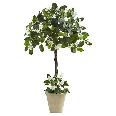 Stephanotis Topiary with Planter - Green (3ft) - image 1 of 1