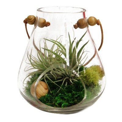 Exceptionnel Rosary Terrarium Living Air Plants In Decorative Glass Container    Livetrends Design