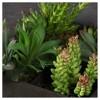 """Artificial Succulent Wall Arrangement (14"""") Green - Vickerman - image 3 of 3"""