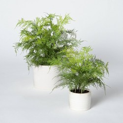 Artificial Fern Plant in Pot Green/White - Threshold™ designed with Studio McGee