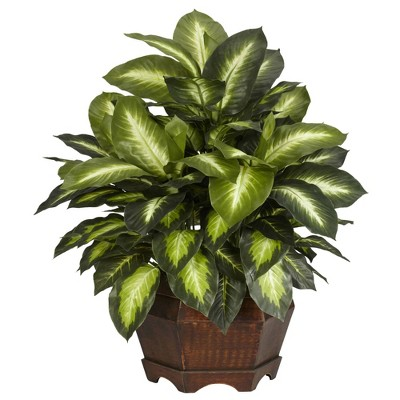 "24"" x 24"" Artificial Golden Dieffenbachia Silk Plant in Wooden Pot - Nearly Natural"