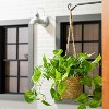 Faux Pothos Leaf Hanging Plant - Hearth & Hand™ with Magnolia - image 4 of 4