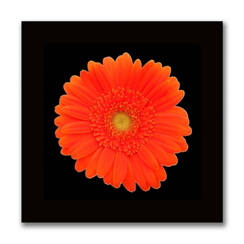ORANGE GERBERA DAISY FLOWER CANVAS PRINT WALL ART PICTURE READY TO HANG
