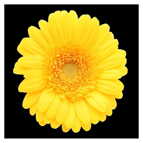 'Yellow Gerber Daisy' Ready to Hang Canvas Wall Art - image 1 of 2