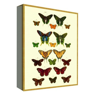 "11"" x 14"" Butterfly Collection II Decorative Wall Art - PTM Images"