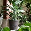 "16"" Polyresin Arabella Planter  - Rust - Sunnydaze Decor - image 3 of 4"