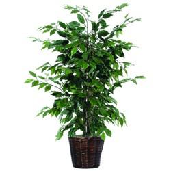 "Artificial Ficus Bush - Green (4"")"
