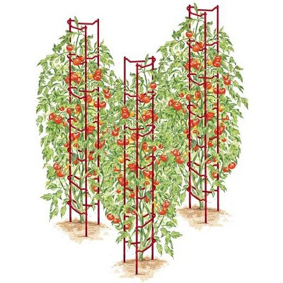 Green Tomato Ladders, Set of 3 - Gardener's Supply Company