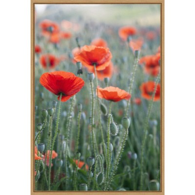 """16"""" x 23"""" Poppies in Bloom by Brent Bergherm Danita Delimont Framed Canvas Wall Art - Amanti Art"""