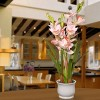 "28"" Light Pink Orchid Flowers - National Tree Company - image 2 of 4"