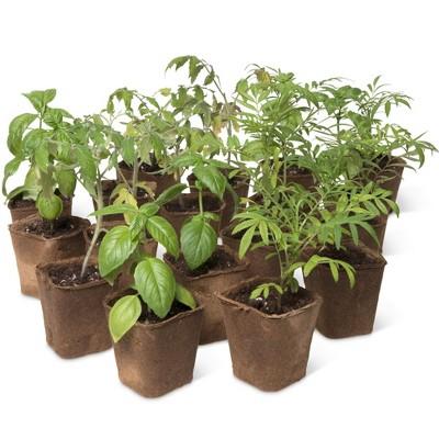 "3-1/2"" Square Biodegradable Pots, Set of 18 - Gardener's Supply Company"