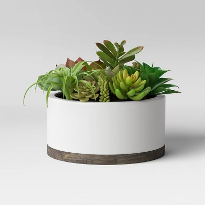 Succulents in White Pot - Project 62™