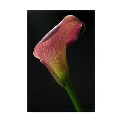 "12"" x 19"" Light Pink Lily by Gordon Semmens - Trademark Fine Art"