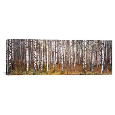 Silver birch trees in a forestNarke, Sweden by Panoramic Images Canvas Print (12  x 36 )