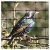 "100""x14"" Standard Bird Netting - Bird-X - image 4 of 4"