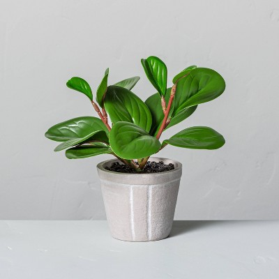 "7"" Mini Faux Peperomia Potted Plant - Hearth & Hand™ with Magnolia"