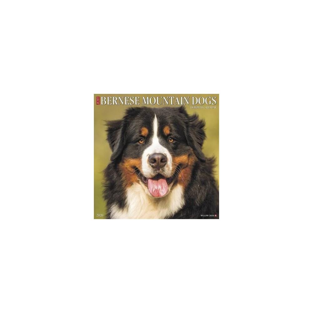 Just Bernese Mountain Dog 2020 Calendar - (Paperback)