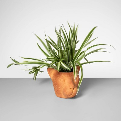 15  x 13  Artificial Spider Plant In Cheetah Terra Cotta Pot - Opalhouse™