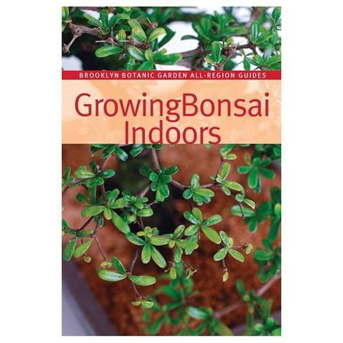 Growing Bonsai Indoors - Brussel's Bonsai - image 1 of 1