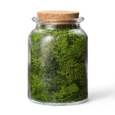 Preserved Moss Decorative Filler Green - Hilton Carter for Target
