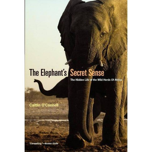 The Elephant's Secret Sense - by  Caitlin O'Connell (Paperback) - image 1 of 1