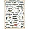 Eurographics Inc. Freshwater Fish 1000 Piece Jigsaw Puzzle - image 2 of 4