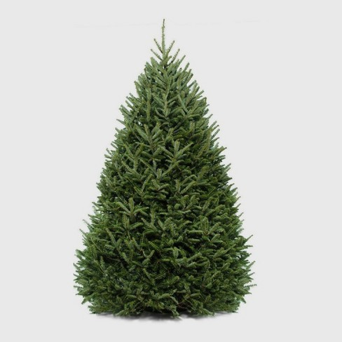 6' To 7' Live Fresh Cut Fraser Fir Christmas Tree - Cottage Hill : Target - 6' To 7' Live Fresh Cut Fraser Fir Christmas Tree - Cottage Hill
