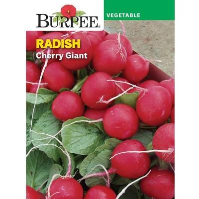 Burpee Radish Cherry Giant