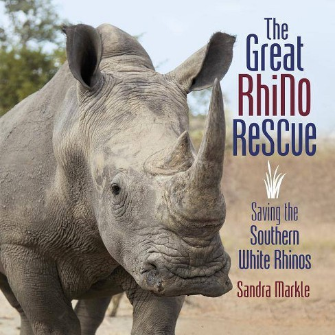 The Great Rhino Rescue - (Sandra Markle's Science Discoveries) by  Sandra Markle (Hardcover) - image 1 of 1