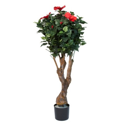 Pure Garden 4ft Hibiscus Tree with Flowers