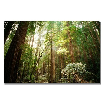 "22"" x 32"" Muir Woods by Ariane Moshayedi - Trademark Fine Art"
