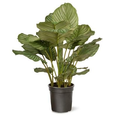 Garden Accents Artificial Calathea Plant Green 30  - National Tree Company®