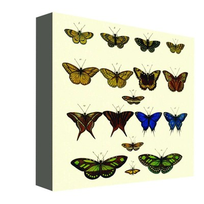 "16"" x 16"" Butterfly Colors I Decorative Wall Art - PTM Images"