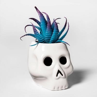 Skull Halloween Succulent White - Hyde & EEK! Boutique™