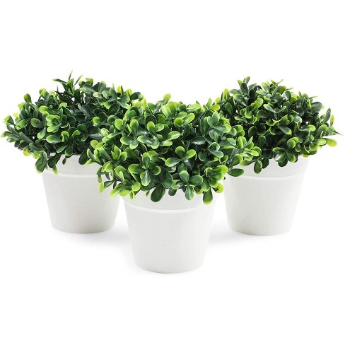 Juvale Mini Artificial Plants In White Pots Home Decor 5 X 5 2 Inch 3 Pack Target