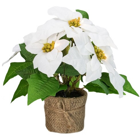Northlight 11 75 Led Artificial White Poinsettia Potted Plant Clear Lights Target