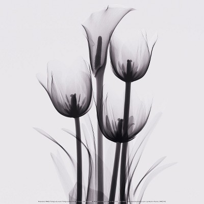 Art.com  Tulips and Arum Lily  Wall Panel