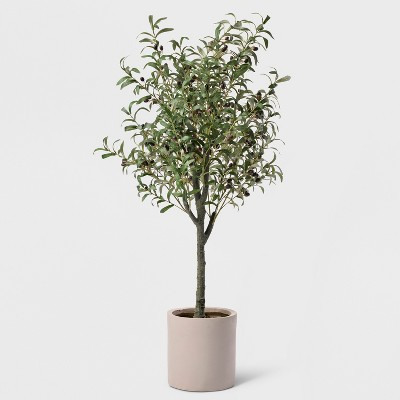 "60"" Potted Olive Tree - Lloyd & Hannah"