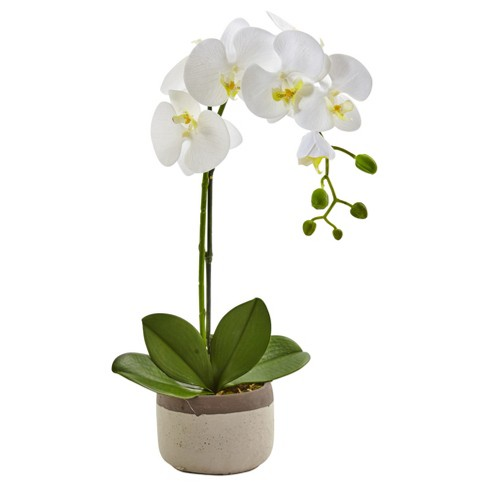 Phalaenopsis Orchid In Ceramic Pot Nearly Natural