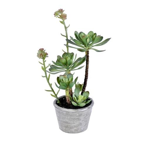 """Vickerman 13.5"""" Green Succulent, Paper Pot. - image 1 of 2"""