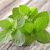 """Burpee Herb 'Peppermint' 1pc Seasonal Grown In All U.S.D.A. Hardiness Zones National Plant Network 4"""" - image 3 of 4"""