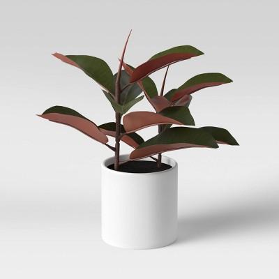 "15"" x 10"" Artificial Rubber Plant in Ceramic Pot - Project 62™"