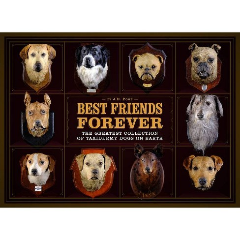 Best Friends Forever - by  J D Powe (Hardcover) - image 1 of 1