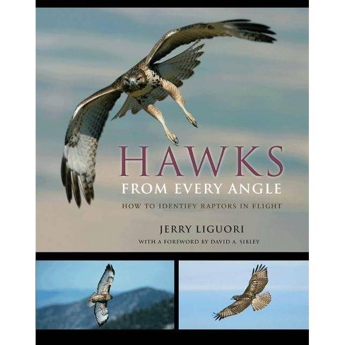 Hawks from Every Angle - by  Jerry Liguori (Paperback) - image 1 of 1